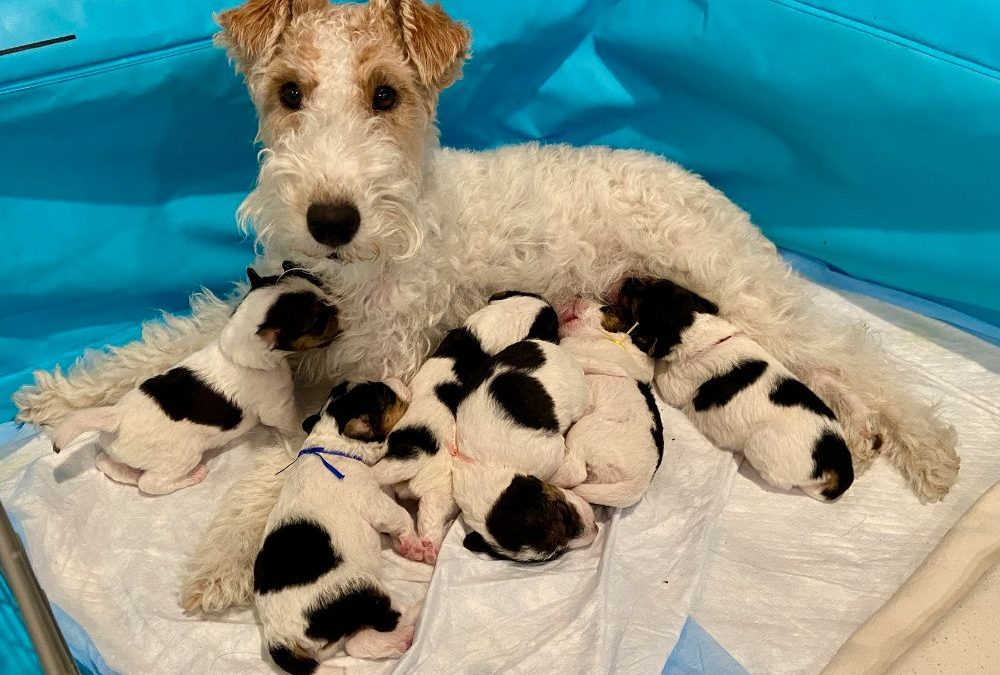 Puppies are 3 weeks old!